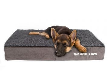 The Dogs Bed Review