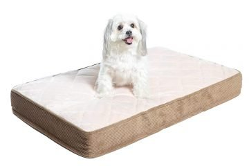 Padded Orthopedic Dog Bed Review