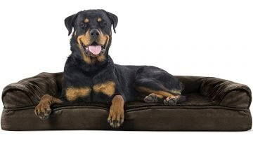 Furhaven Orthopedic Dog Couch Review