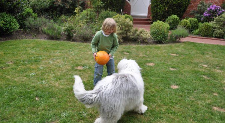 Best Wireless Dog Fence System