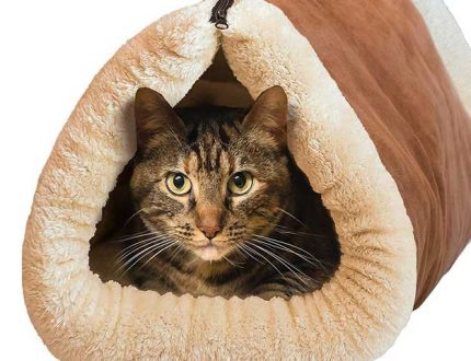 Heated Cat Bed – Warmth For Your Kitten