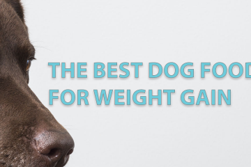 The best doog food for weight gain