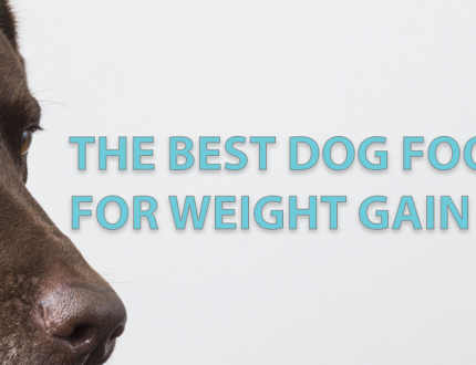 Dog Foods for Weight Gain