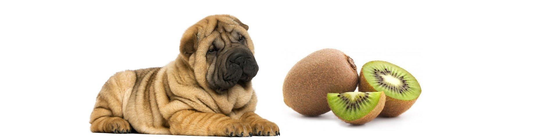 Dogs Kiwi? Can Dogs Eat Kiwi