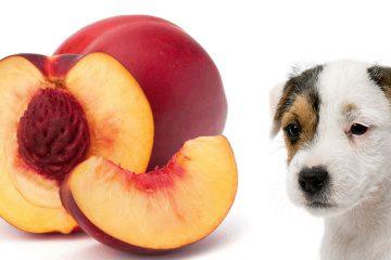 Dog and nectarines