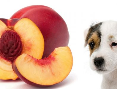 Dog and nectarines