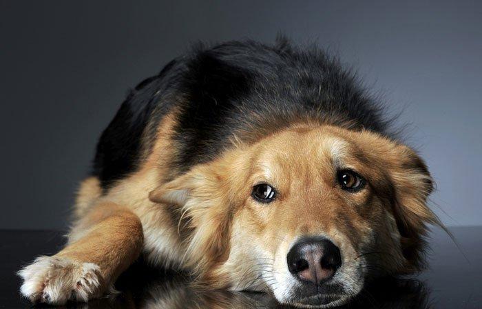 Coconut medicine for dogs