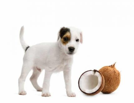 Can Dogs Eat Coconut? Is It Safe For Them?