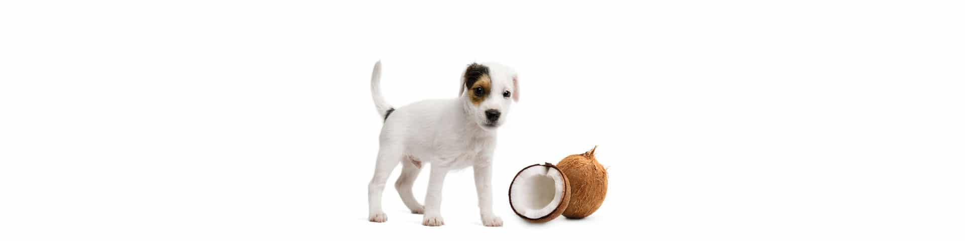 dog and coconut