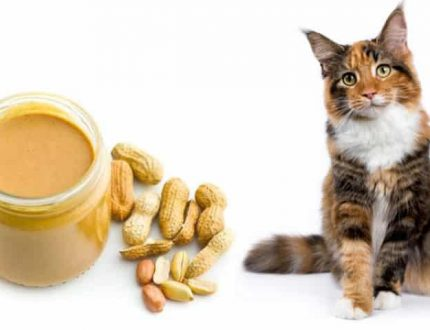 Can Cats Eat Peanut Butter?