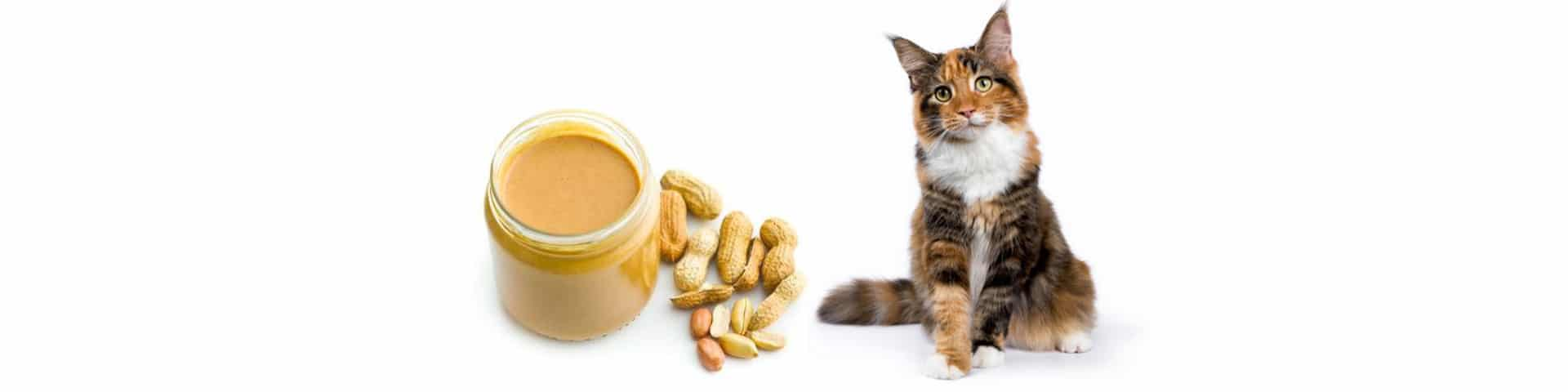 Peanut butter and cat