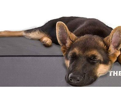 best bed for german shepherd