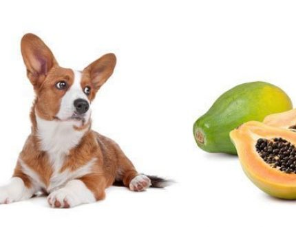 Can Dogs Eat Papaya? Benefits and Potential Problems