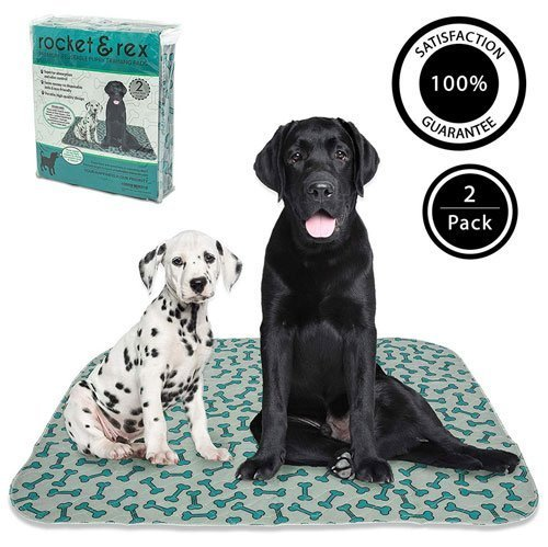 Labrador and Dalmantian dog potty