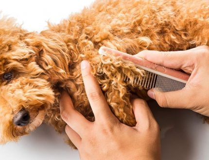The 5 Best Brushes for the Shepadoodle