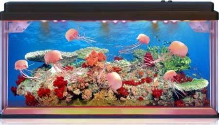 Playlearn Jellyfish Aquarium