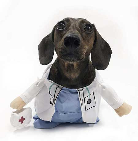 Midlee Doctor Costume for Dachshunds