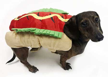 hot dog costumes for dachshunds