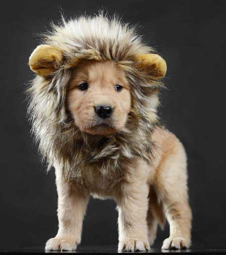 LCFUN Lion Mane Dog Costume