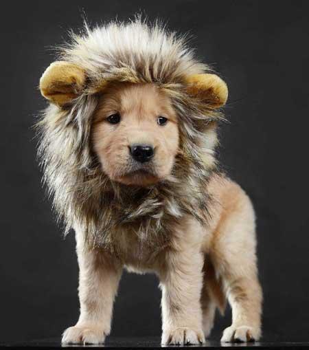 LCFUN Lion Mane Dog Costume
