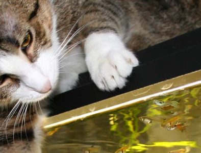 cats and fish tanks