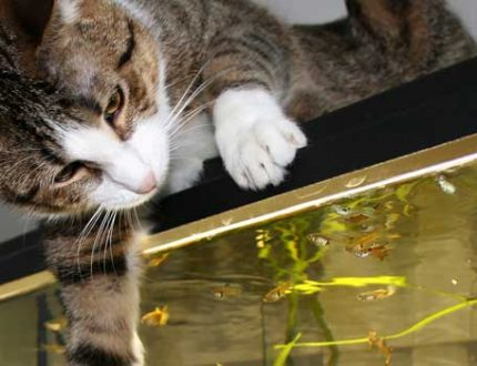 The Best Fake Fish Tank for Cats