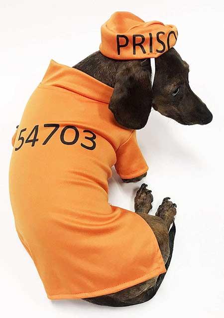 Midlee Orange Prisoner Costume for Dachshund
