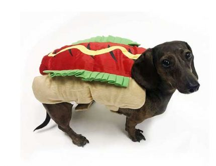The 15 Best Costumes for Dachshunds