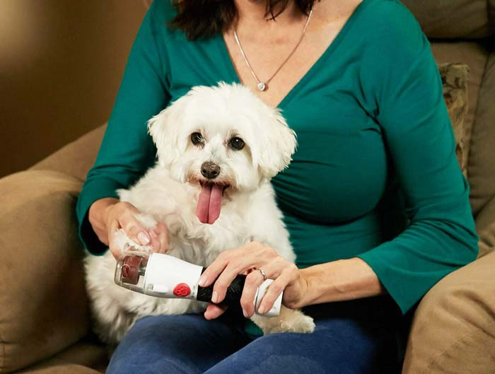 Paw Perfect Nail Trimmer and Maltese dog