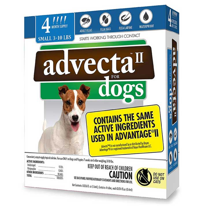 Advecta II and dogs
