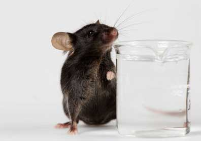 Mouse and water glass